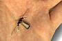 Ученые создали летающую муху-робота